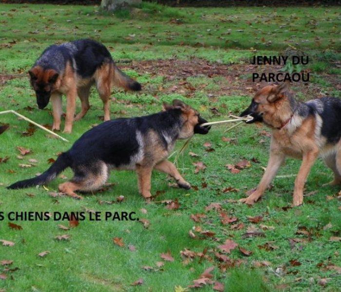 chien-dans-le-parc-3