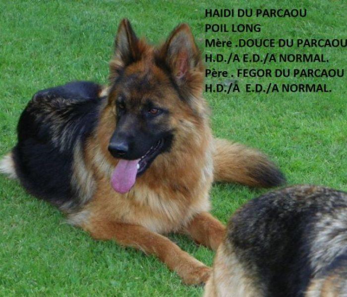 haidi-du-parcaou-poil-long-3