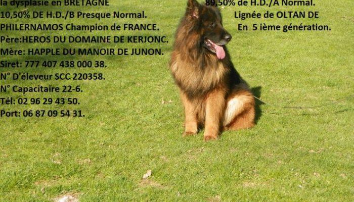 life-des-brumes-de-broceliande-poil-long-1-3