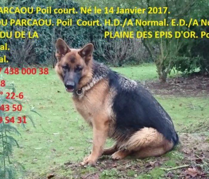 nyola-du-parcaou-ne-le-14-01-2017-1